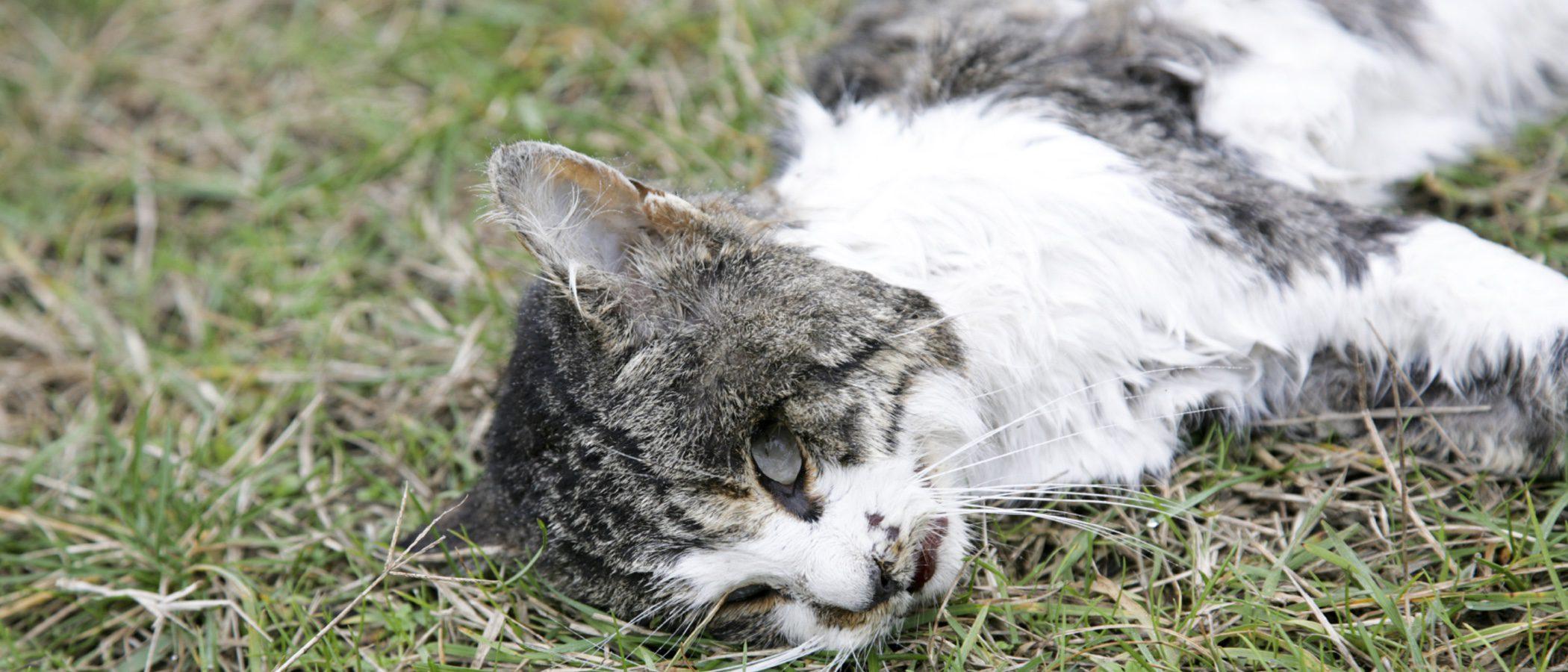 Cómo asumir la muerte de un gato