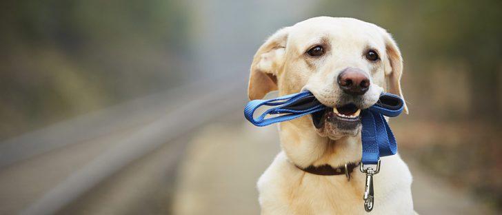 Escoge la correa adecuada para tu perro