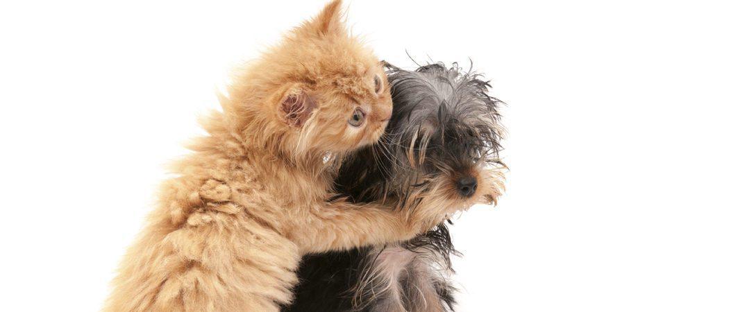 Puedo tener un perro y un gato viviendo en la misma casa - Perros para tener en casa ...