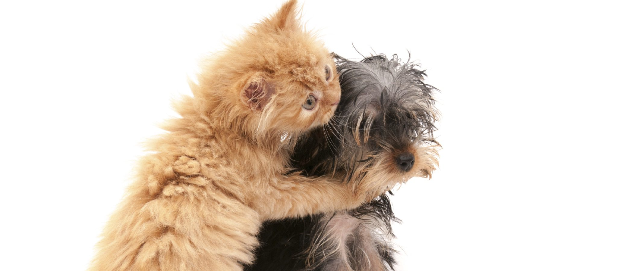 ¿Puedo tener un perro y un gato viviendo en la misma casa?