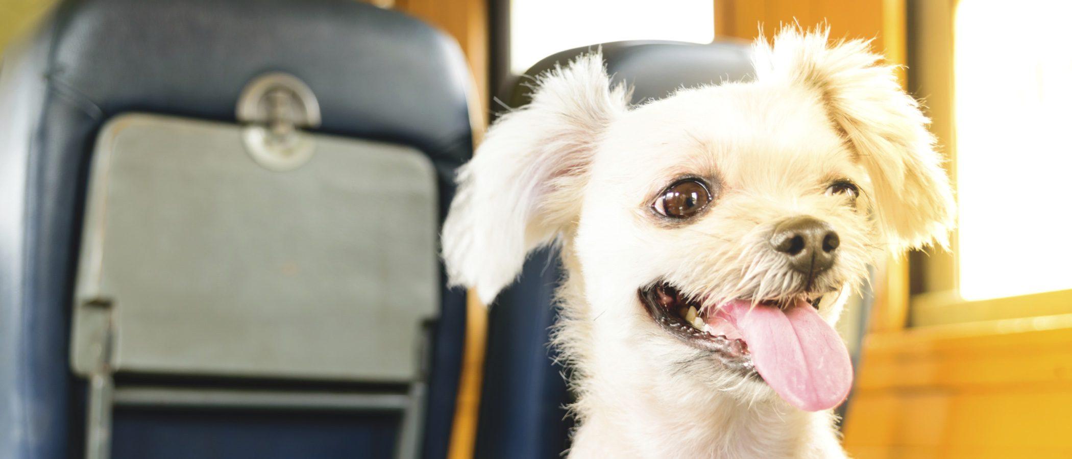 ¿Puedo llevar a mi mascota en un medio de transporte público?
