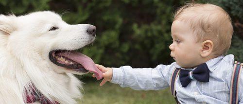 Mascotas que nunca deberías tener en casa si tienes niños pequeños