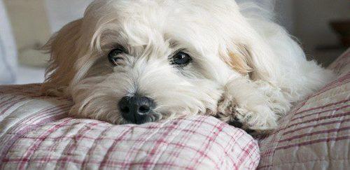 Mi Perro Ha Muerto Me Compro Otro Inmediatamente O Debo Esperar