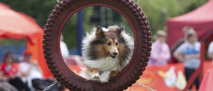 Deportes para perros: mantén a tu mascota fuerte y sana