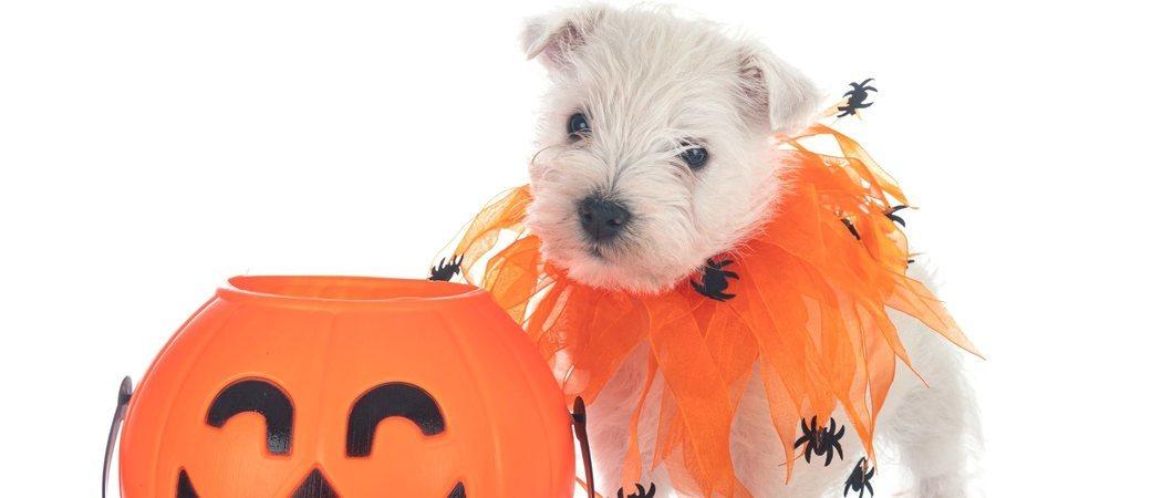 Disfraza a tu perro para Halloween