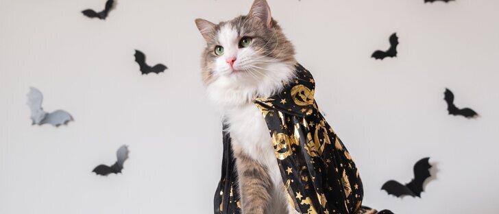 Disfraza a tu gato para Halloween