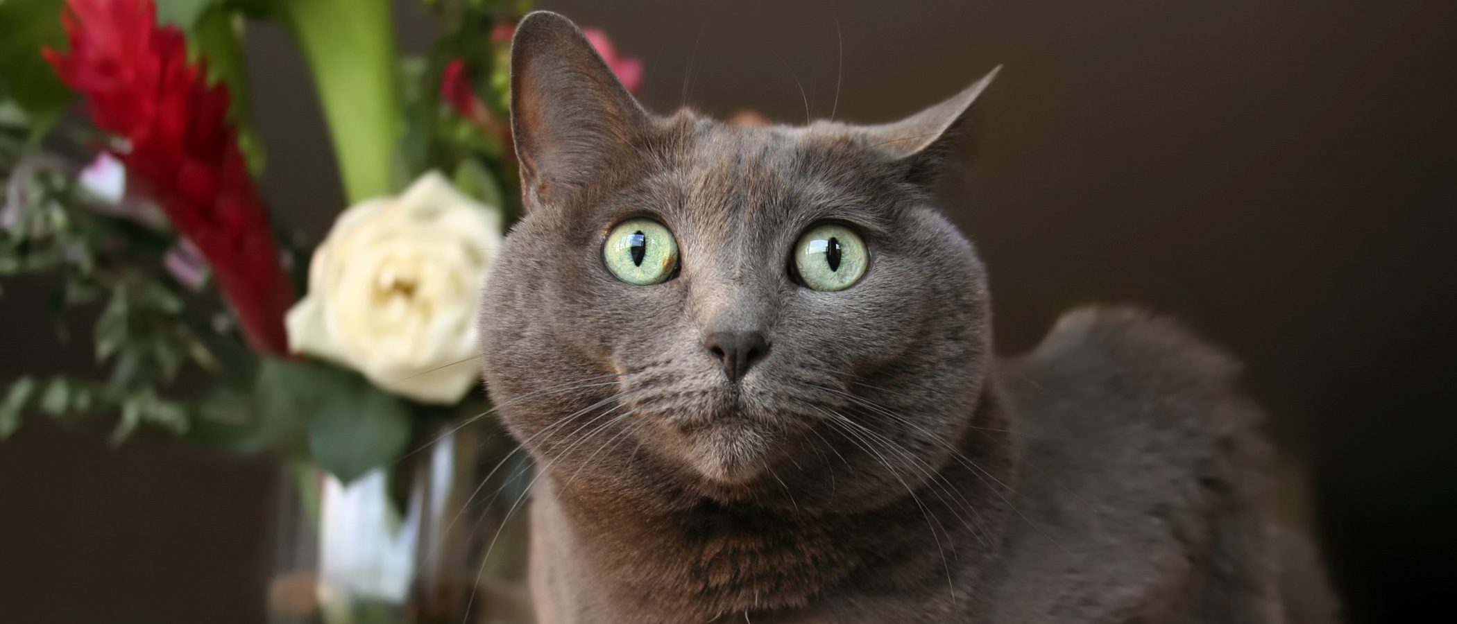¿Por qué tienen estrés los gatos?