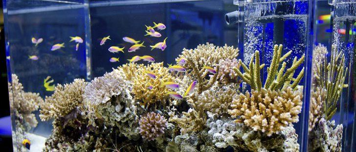 ¿Cual es la diferencia entre acuario y pecera?