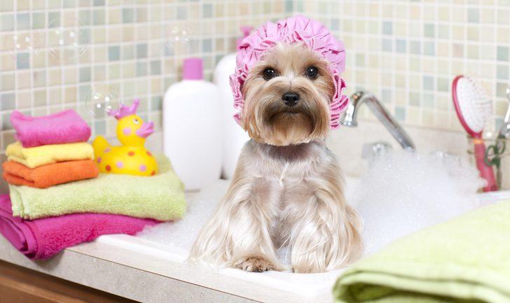 ¿Cada cuánto tengo que bañar a mi perro?