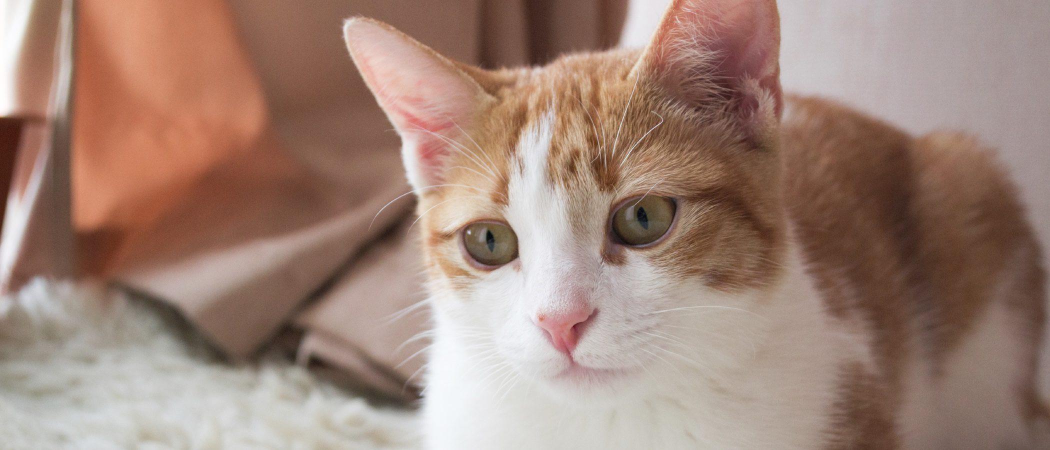 Residencias felinas: hoteles para gatos