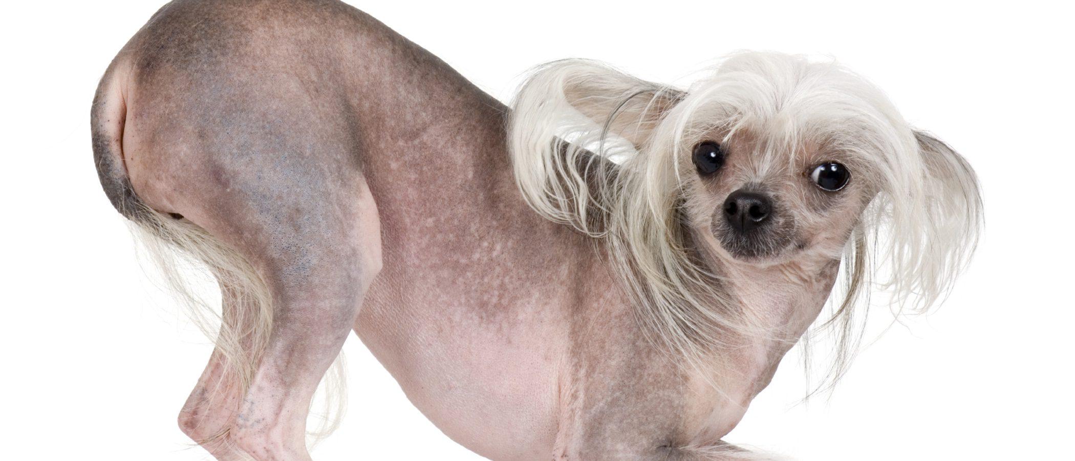 Los 12 perros más feos