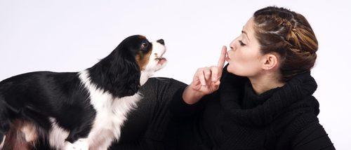 Mi perro ladra y molesta a los vecinos: ¿Qué puedo hacer?
