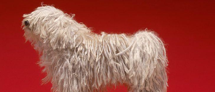 Bergamasco: Razas de perros