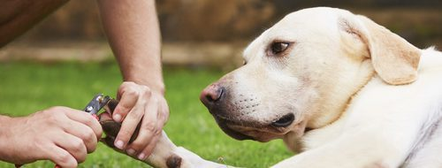 Cómo cortar las uñas de un perro