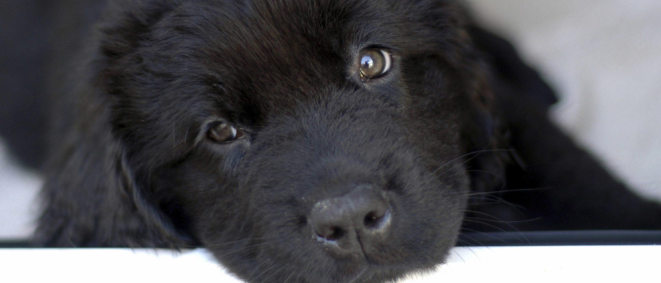 Terranova: Raza de Perros