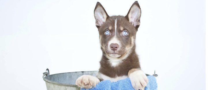 Peluquería canina: ¡pon guapo a tu perro!