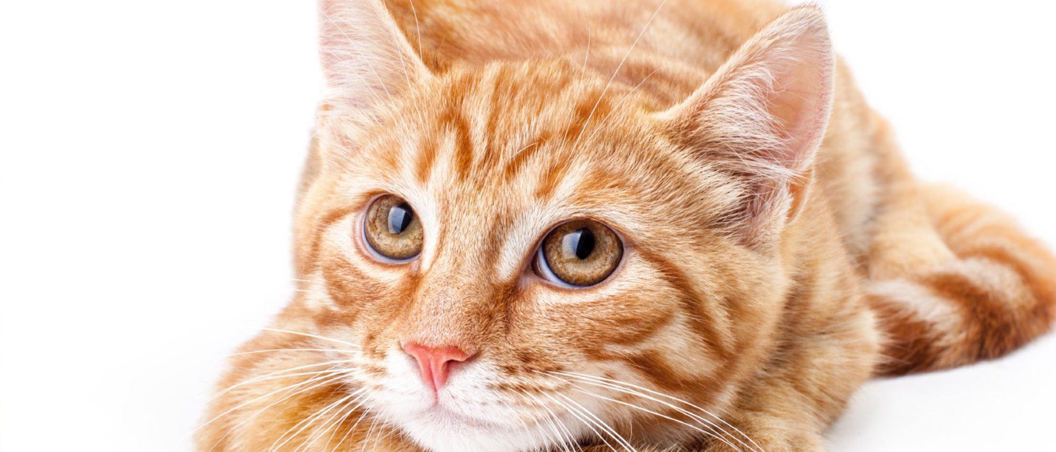 Depresión en los gatos: cómo saber si nuestra mascota está triste