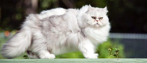 como hago bajar de peso a mi gato