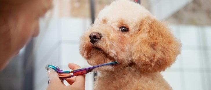 Pautas y consejos para cortar el pelo a tu perro