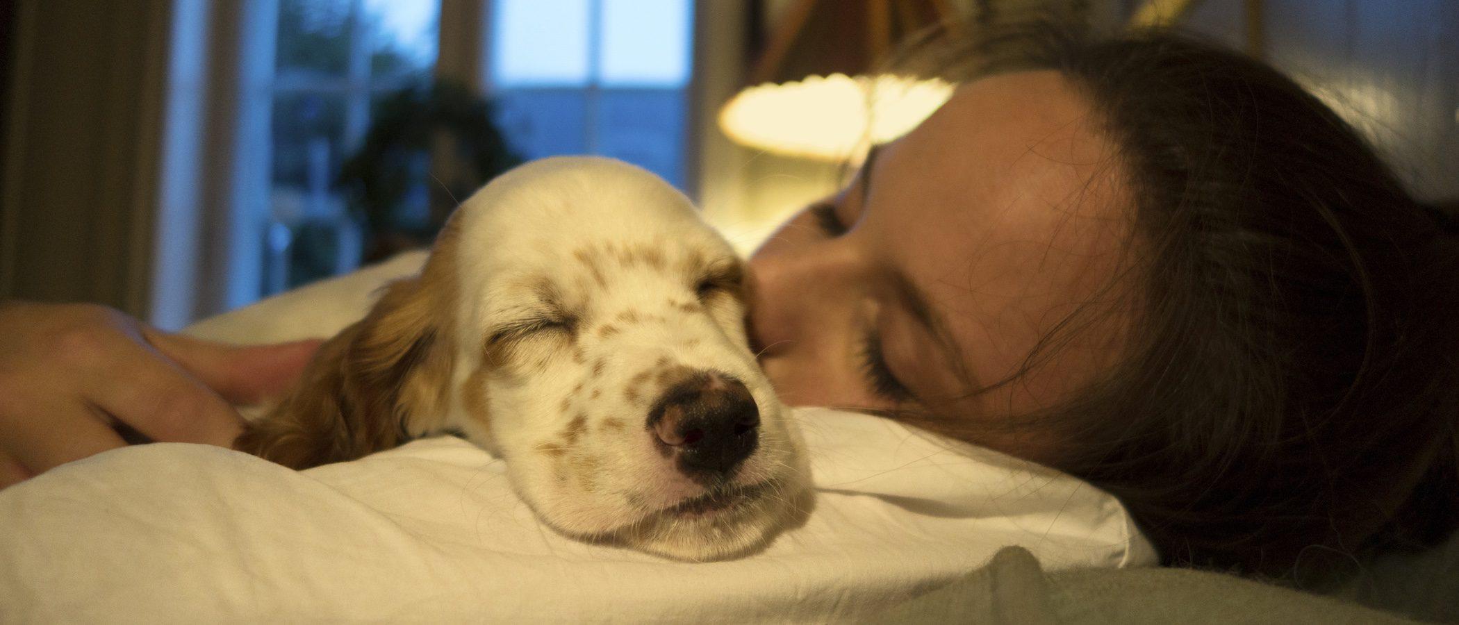 5 consejos para que tu perro duerma toda la noche