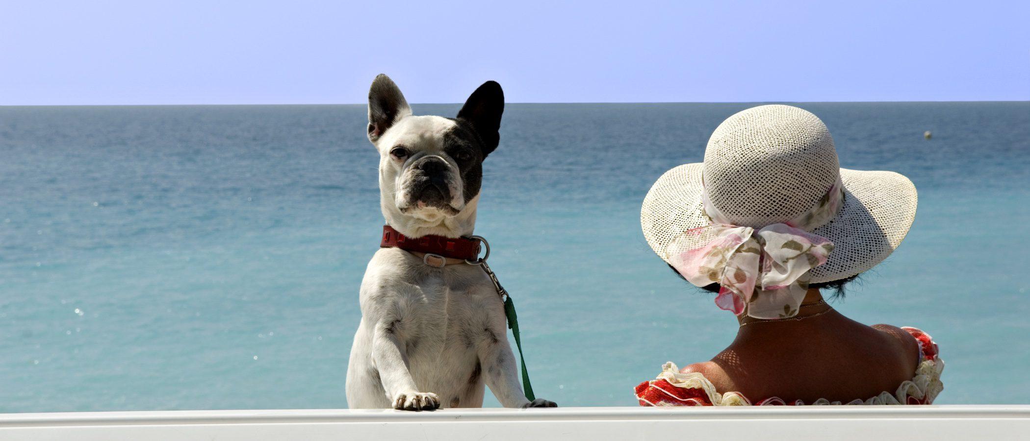 Planes que hacer en verano al lado de tu perro