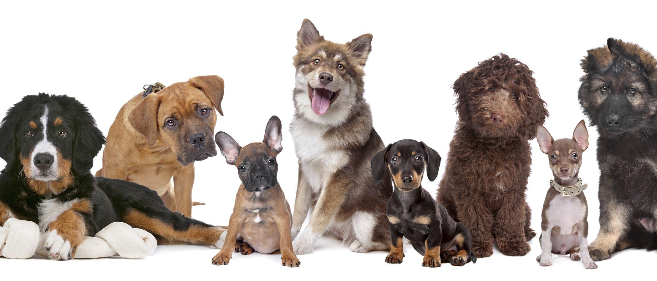 ¿Cuánto dura el embarazo de una perra?