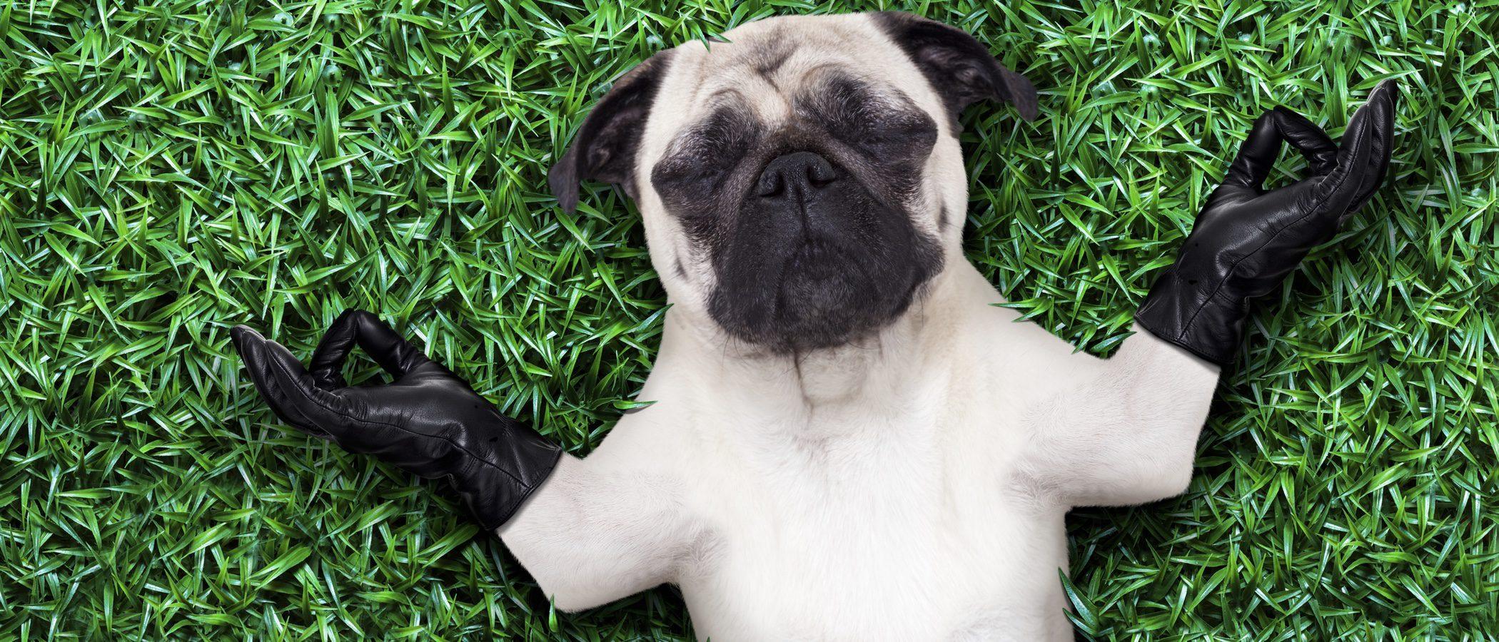 ¿Cómo puedo saber si mi perro es hiperactivo?