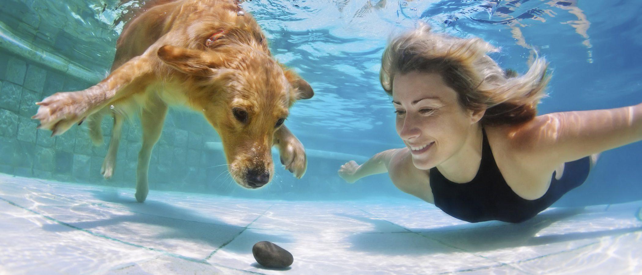 ¿Cómo puedo hacer que mi perro no se asuste con el agua?