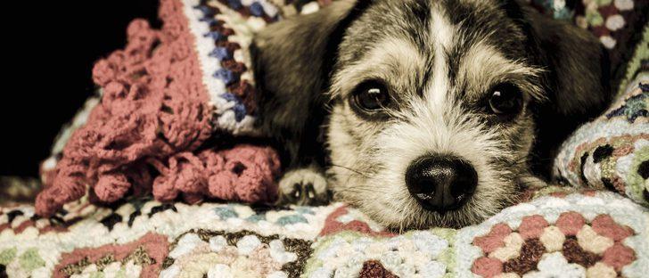 ¿Cómo puedo parar el hipo de mi perro?