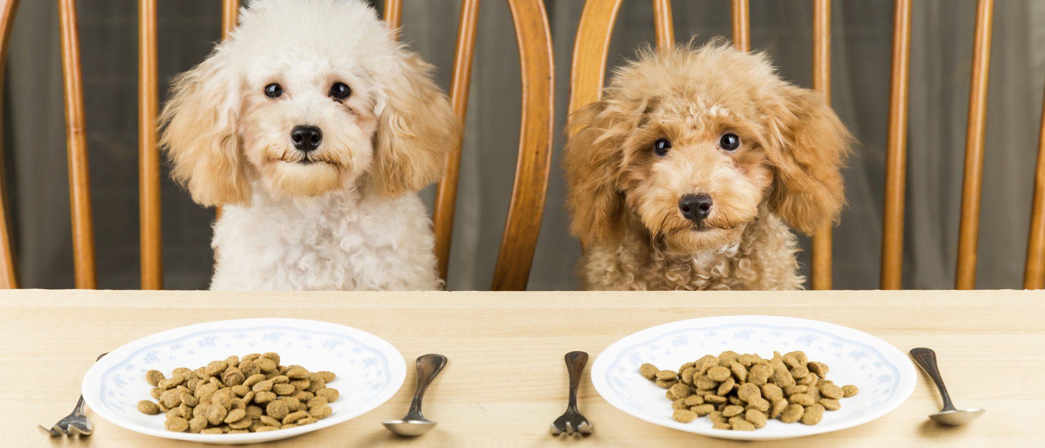 Cocina para tu perro: Recetas rápidas y sanas para tu mascota