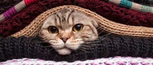 Ropa para gatos: Ventajas e inconvenientes de vestir a tu mascota