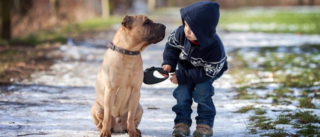 Consigue que tu perro aprenda a dar la pata