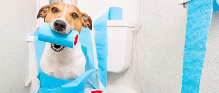 ¿Cómo puedo combatir la diarrea de mi perro?