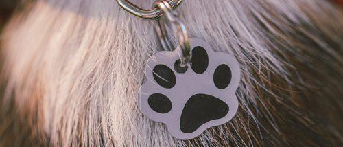 Consejos para elegir el nombre de tu perro