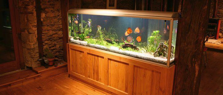 5 pasos para tener un acuario bonito