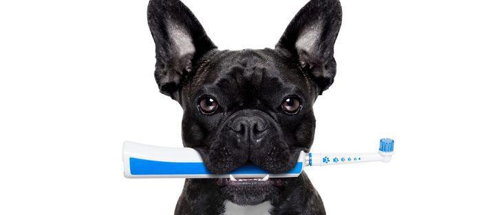 ¿Puede un perro tener caries?