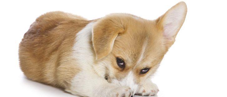 Cómo puedo hacer que mi perro sea más sociable con mis invitados
