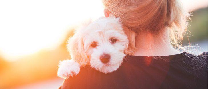 Las 10 razas de perro más cariñosas