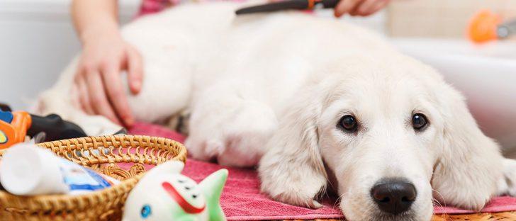 Hoteles a los que puedes ir con tu perro