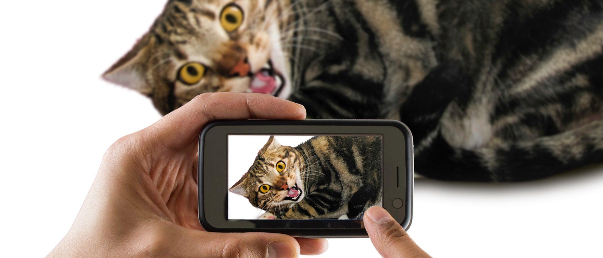 Trucos para conseguir que tu gato esté quieto al hacer una foto
