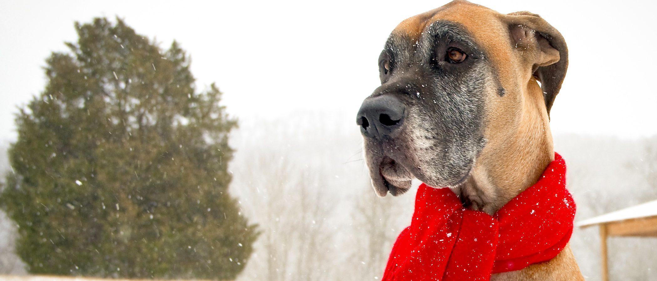Cómo proteger a tu perro del frío