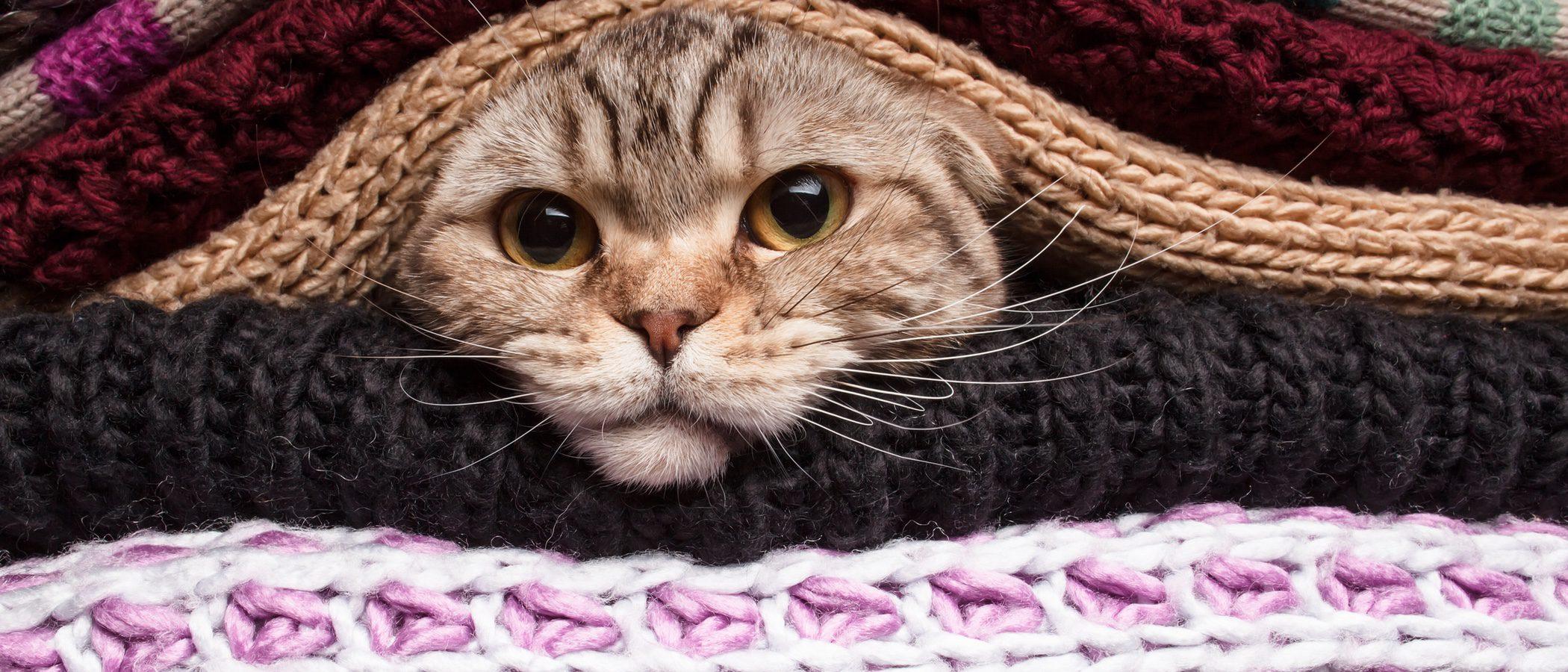 Cómo proteger a tu gato del frío