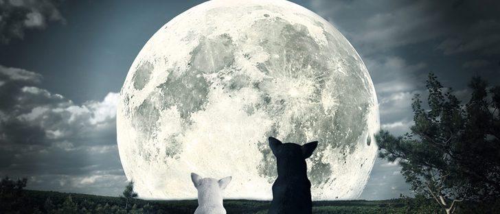 ¿Afecta la luna llena a los perros?