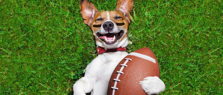 Formas de hacer deporte junto a tu perro