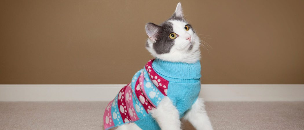 Disfraces para gatos: ¿A favor o en contra?