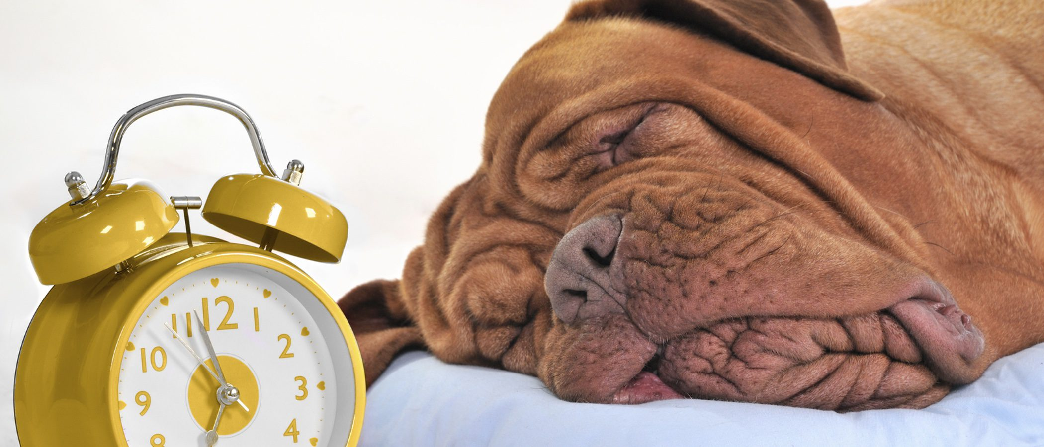 ¿Cuántas horas al día es aconsejable que duerma un perro?