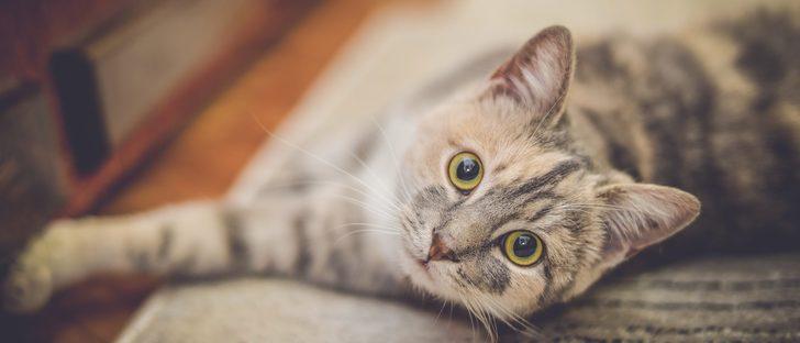 Cómo elegir la arena adecuada para tu gato