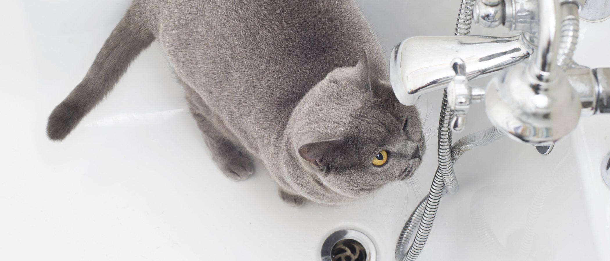 Claves para escoger el champú más adecuado para tu gato