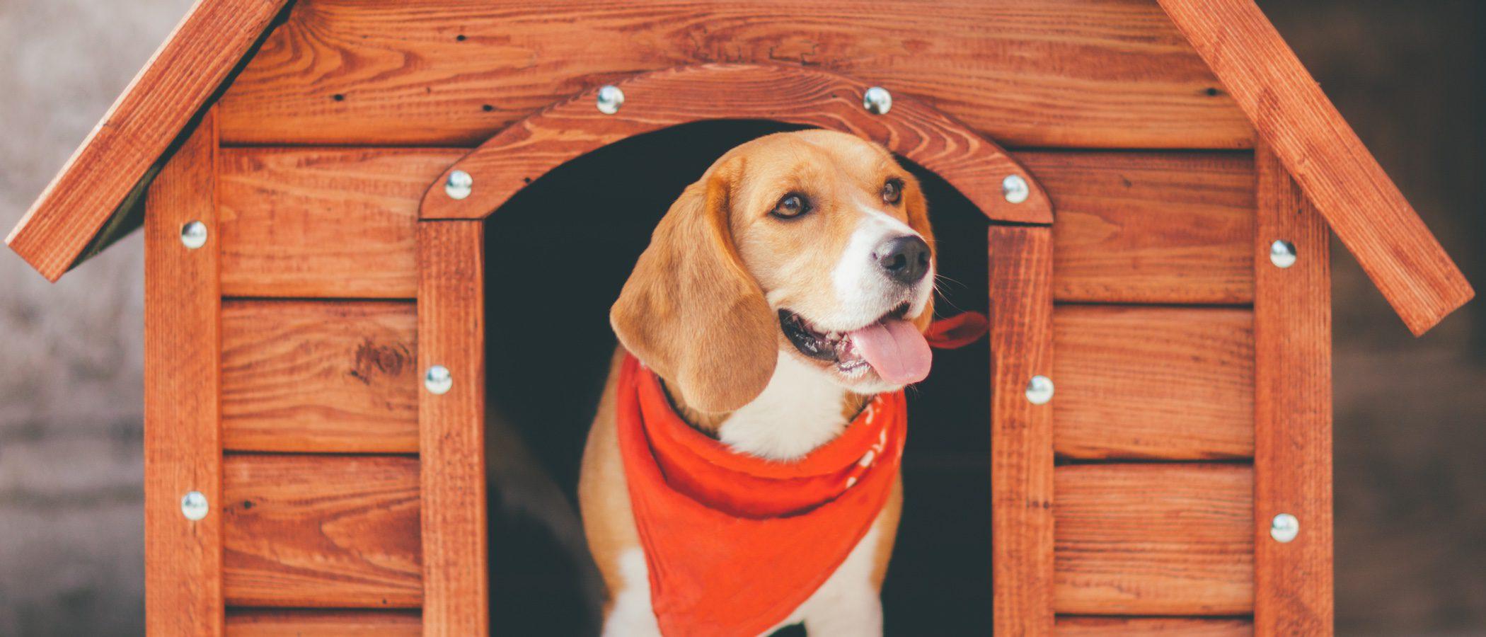 Pautas para escoger la caseta más adecuada para tu perro