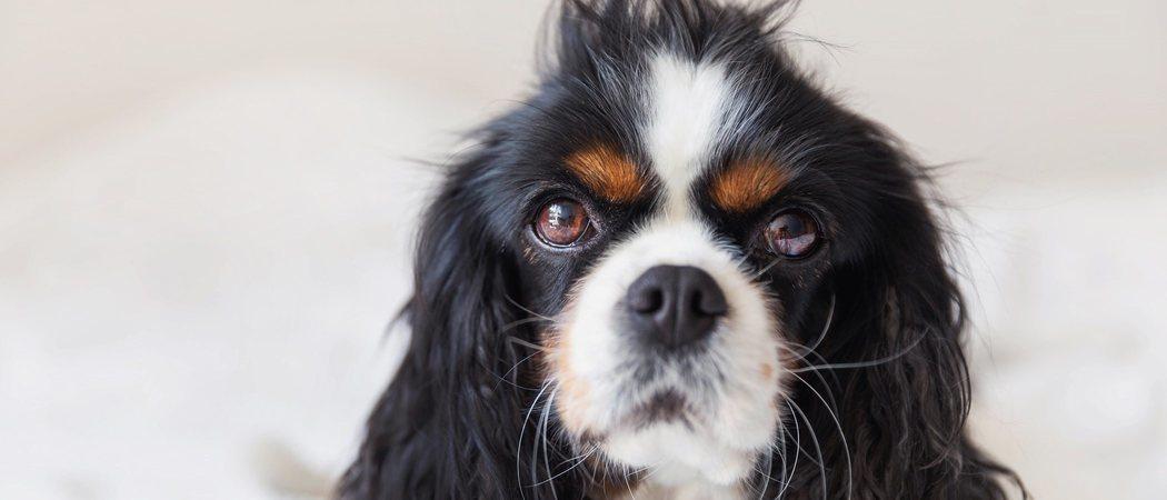 Consejos para desenredar el pelo mi perro